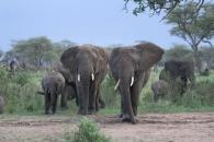África 2011 (1252) (1024x683) (800x534)