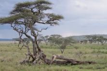 África 2011 (1301) (1024x683) (800x534)
